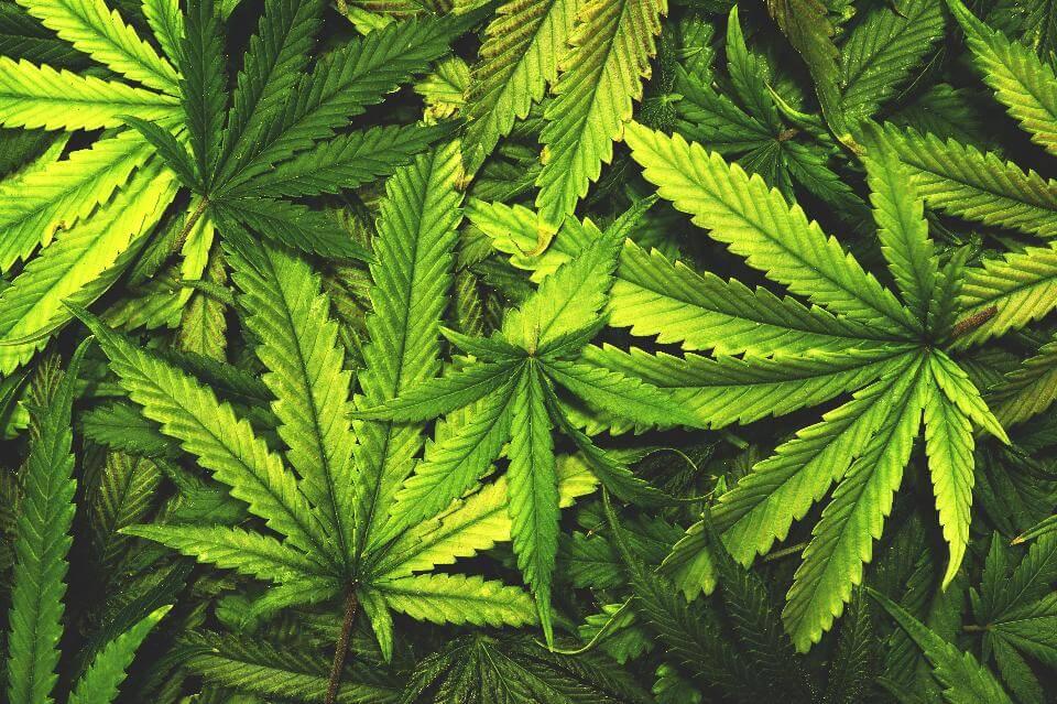 modalità uso marijuana