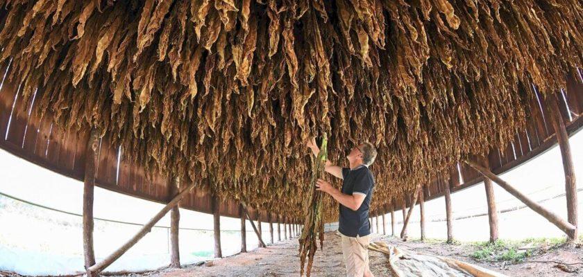 tabacco aromatizzato