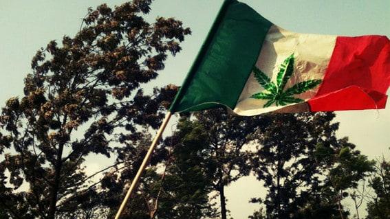 messico legalizzazione cannabis