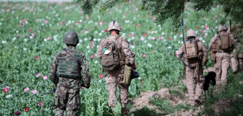 droga afghanistan